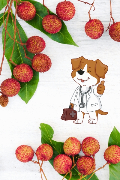 Yes dogs can eat lychee image