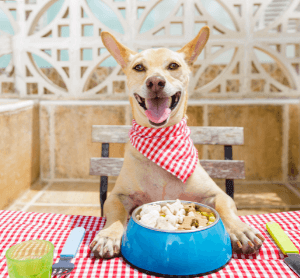 dog eating squid from bowl image
